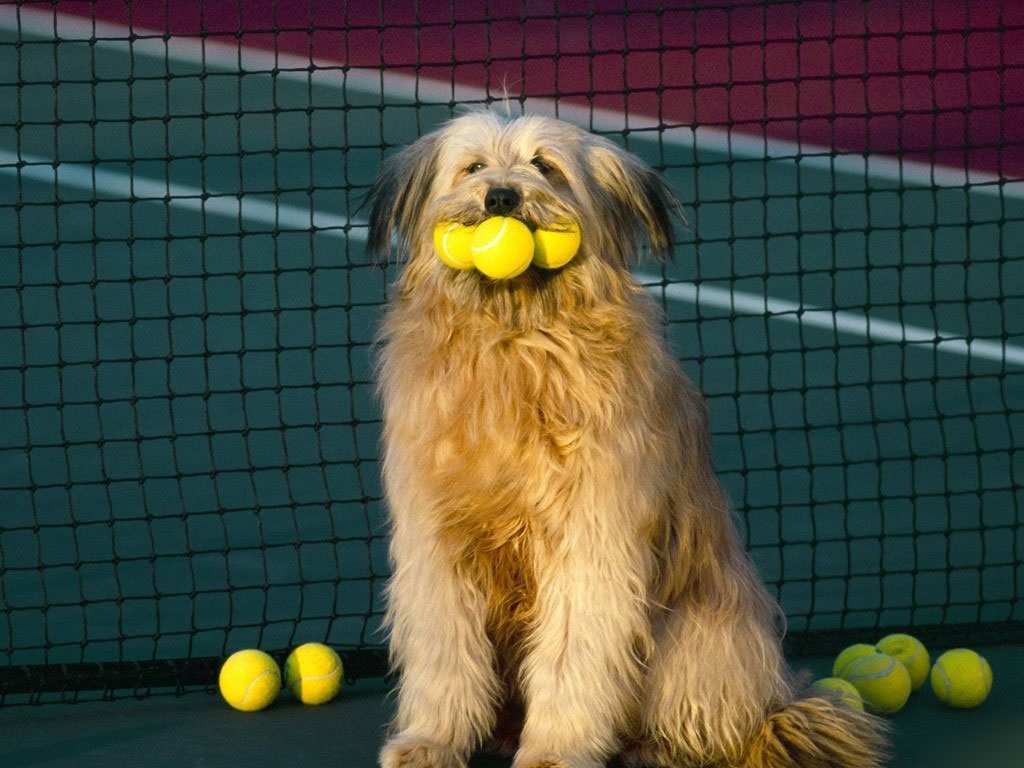 otterhound-dog-golfer-wallpaper